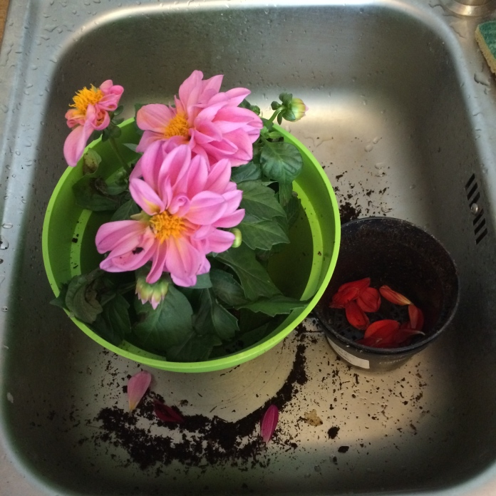 Flowers in the sink.