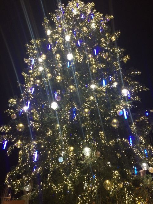 Strasbourg's Xmas tree!