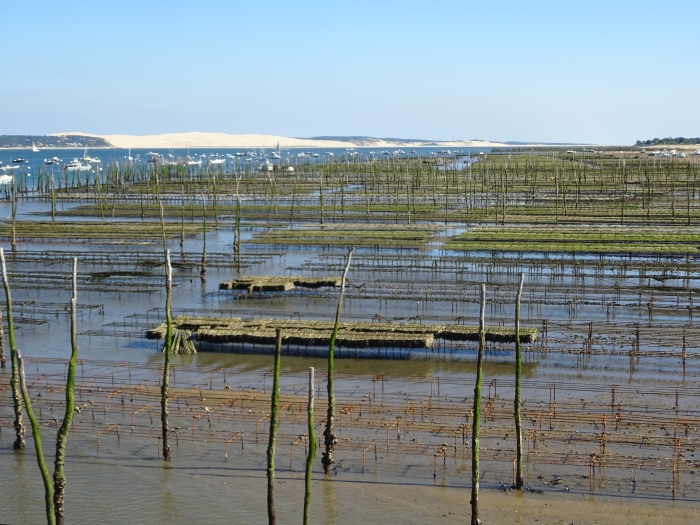 The oyster beds at low tide